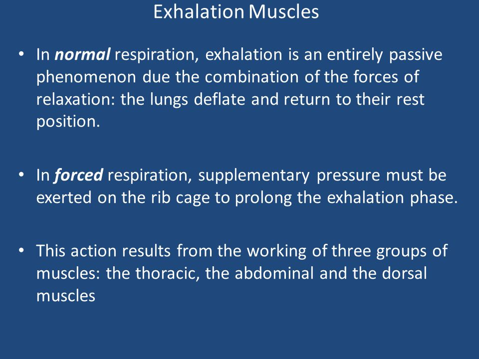 Exhalation Muscles The thoracic muscles: – the internal intercostals and the transverse thoracic The abdominal muscles: – the transverse abdominal, the internal and external oblique and the rectus abdominis - The dorsal muscles: – the great dorsal and the iliocostal.