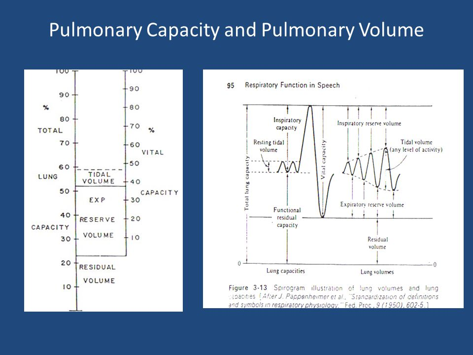 Pulmonary volume = quantity of air that the lungs contain Ventilation amplitude = fn of oxygen need Total pulmonary volume = total lung capacity Residual volume = Air in the lungs after forced exhalation Vital capacity.