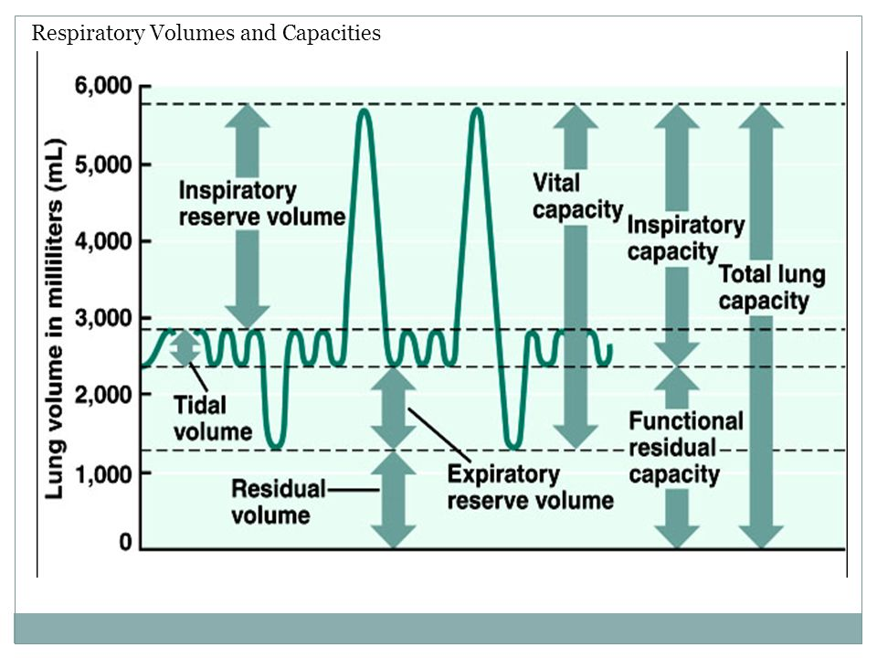 Respiratory Volumes and Capacities