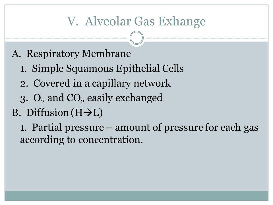V. Alveolar Gas Exhange A. Respiratory Membrane 1.