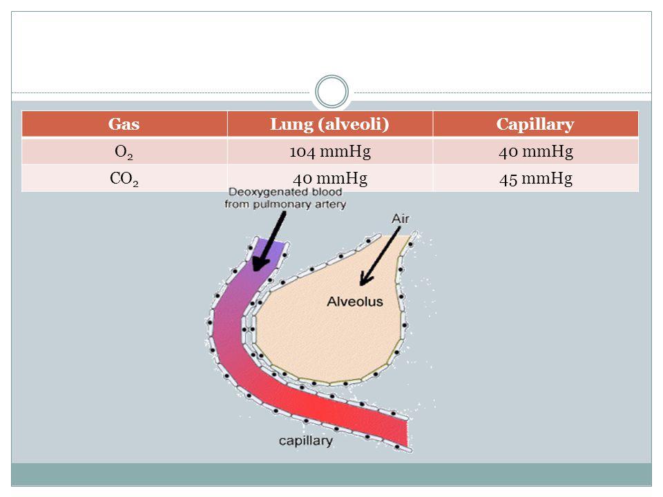 GasLung (alveoli)Capillary O2O2 104 mmHg40 mmHg CO 2 40 mmHg45 mmHg
