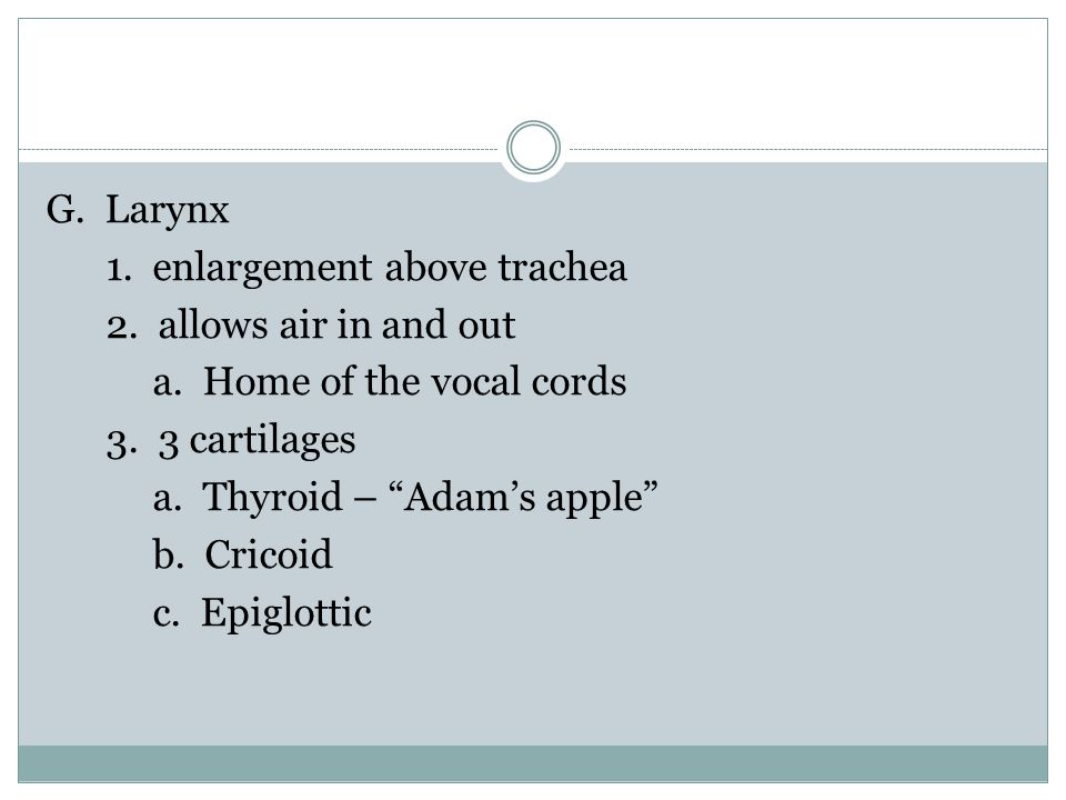 G. Larynx 1. enlargement above trachea 2. allows air in and out a.