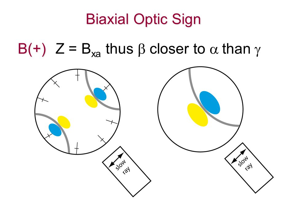Biaxial Optic Sign B(+) B(+) Z = B xa thus  closer to  than 