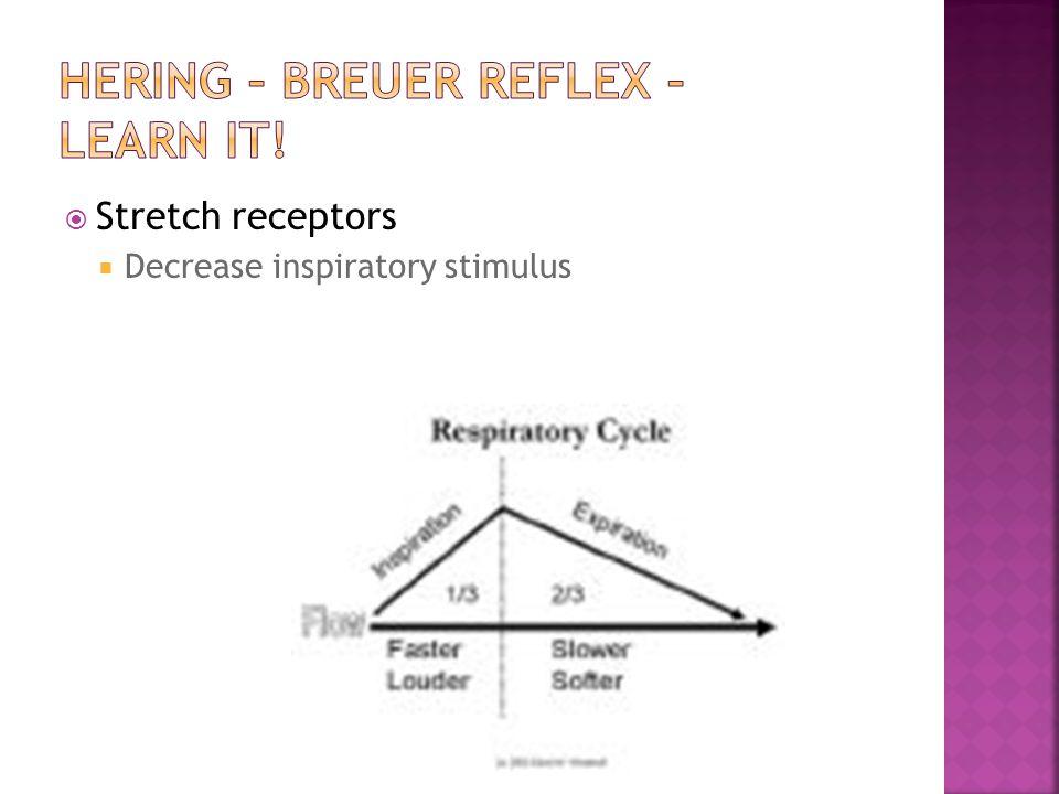  Stretch receptors  Decrease inspiratory stimulus