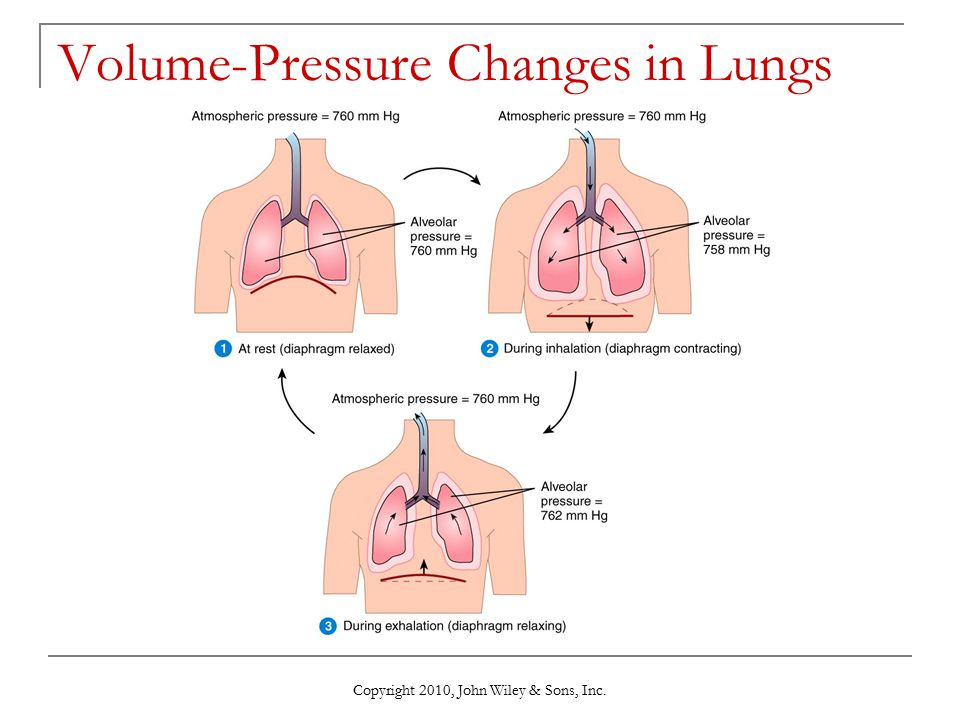 Copyright 2010, John Wiley & Sons, Inc. Volume-Pressure Changes in Lungs