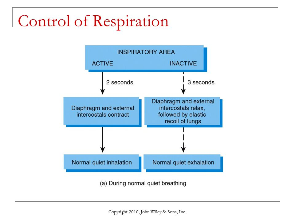 Copyright 2010, John Wiley & Sons, Inc. Control of Respiration