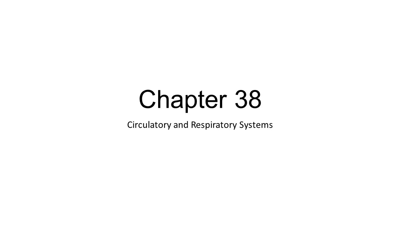 Chapter 38 Circulatory and Respiratory Systems