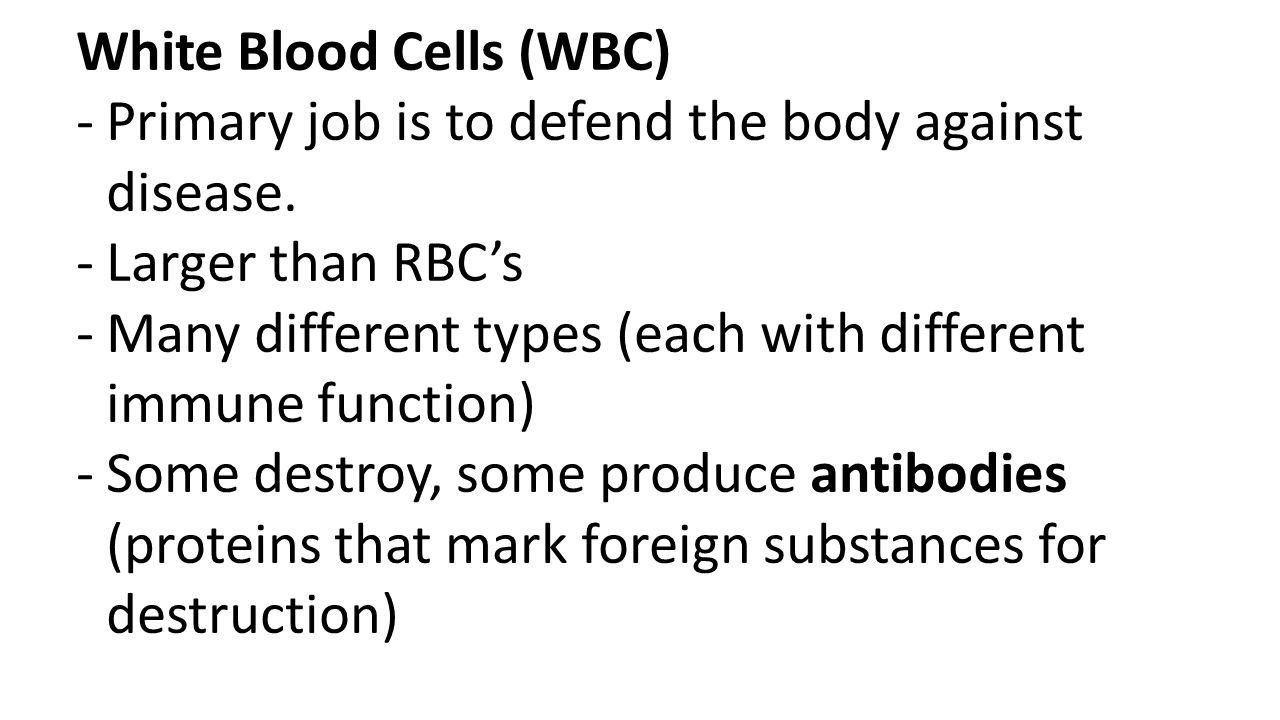 White Blood Cells (WBC) -Primary job is to defend the body against disease. -Larger than RBC's -Many different types (each with different immune funct