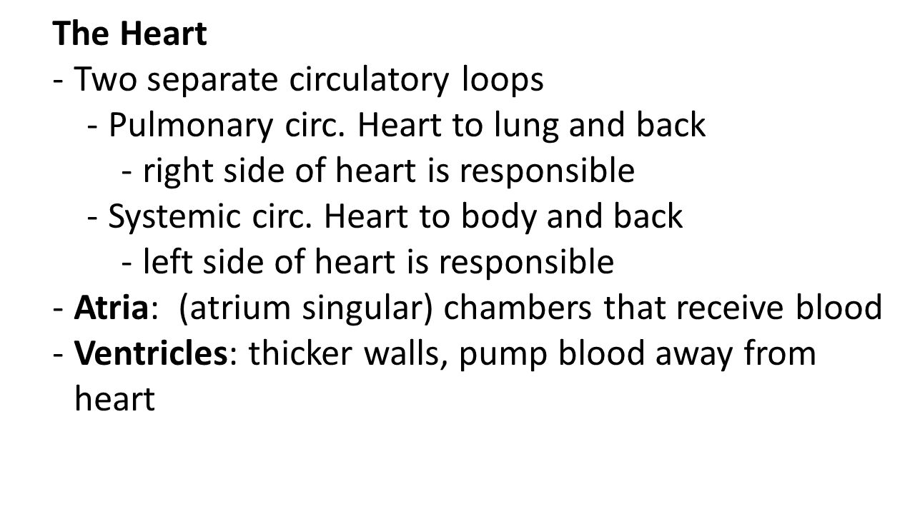 The Heart -Two separate circulatory loops -Pulmonary circ. Heart to lung and back -right side of heart is responsible -Systemic circ. Heart to body an