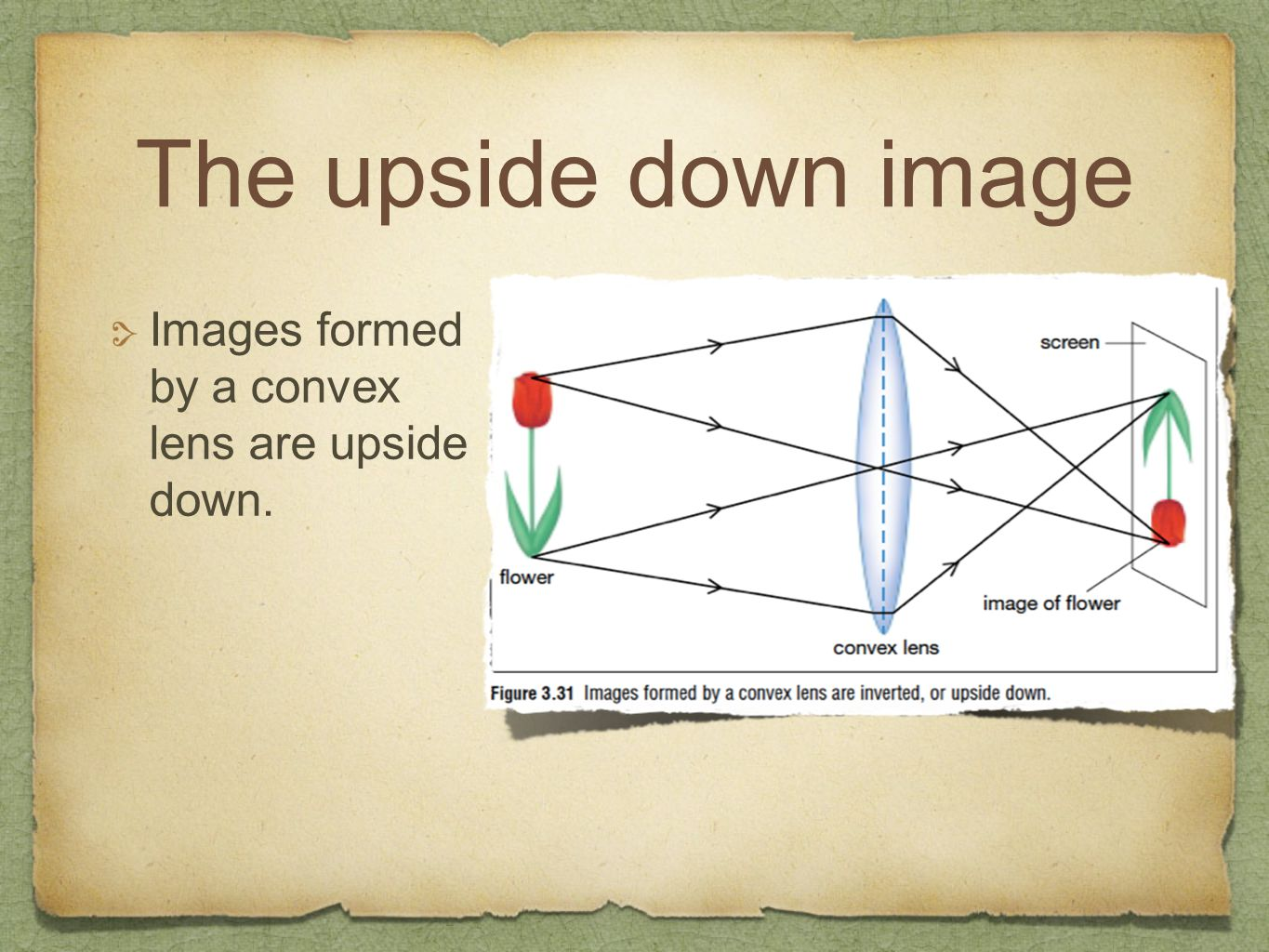 The upside down image Images formed by a convex lens are upside down.
