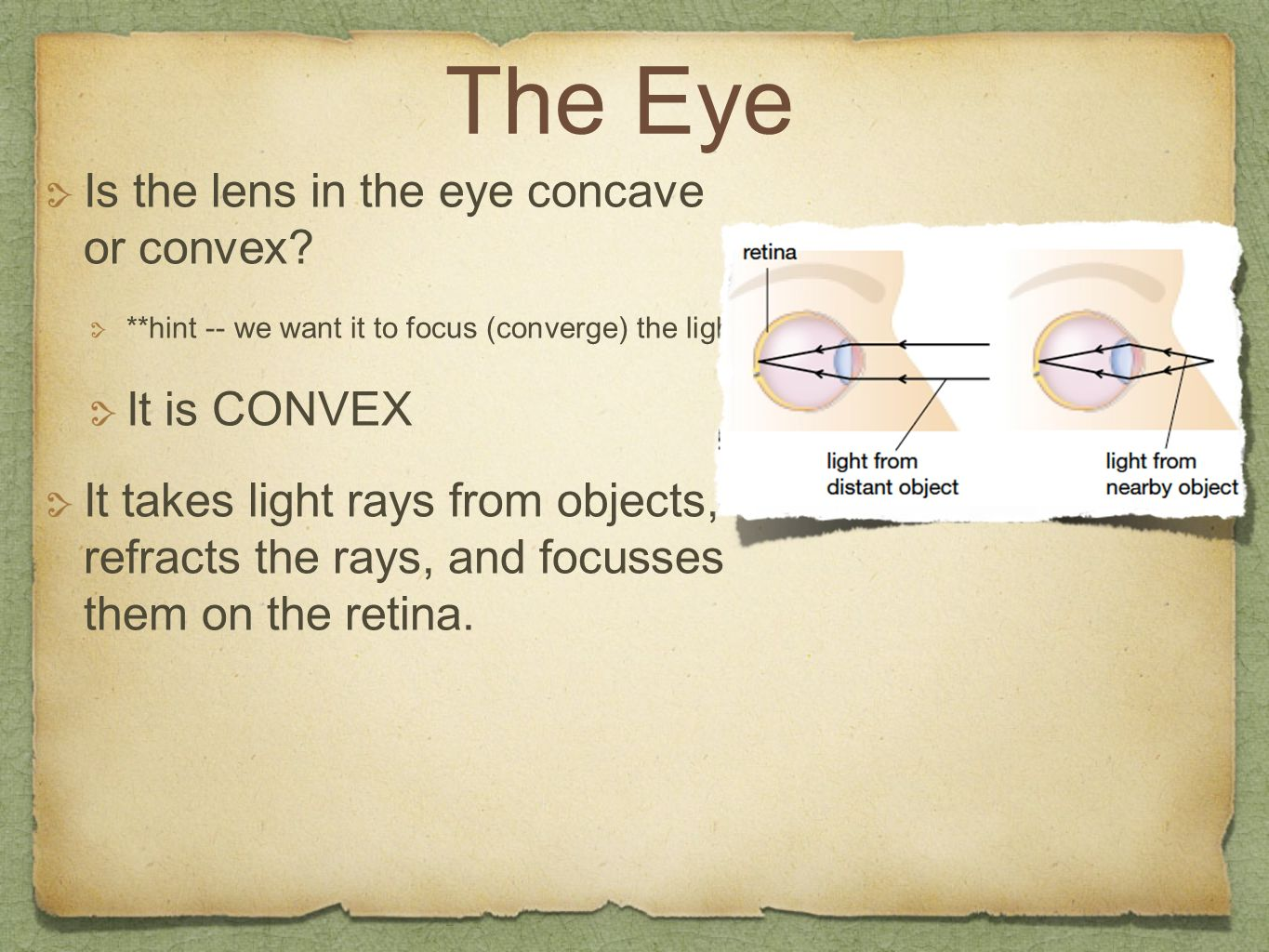 The Eye Is the lens in the eye concave or convex? **hint -- we want it to focus (converge) the light It is CONVEX It takes light rays from objects, re