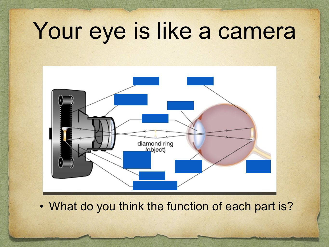 Your eye is like a camera What do you think the function of each part is?