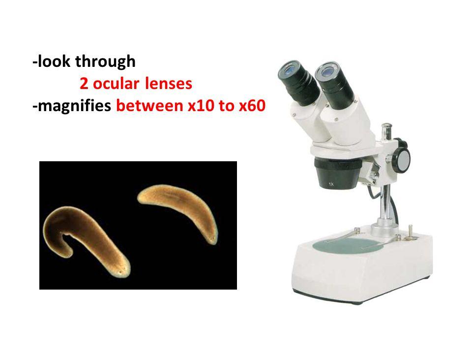 -look through 2 ocular lenses -magnifies between x10 to x60