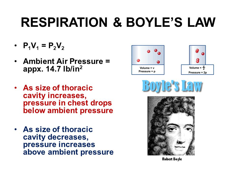RESPIRATION & BOYLE'S LAW P 1 V 1 = P 2 V 2 Ambient Air Pressure = appx.