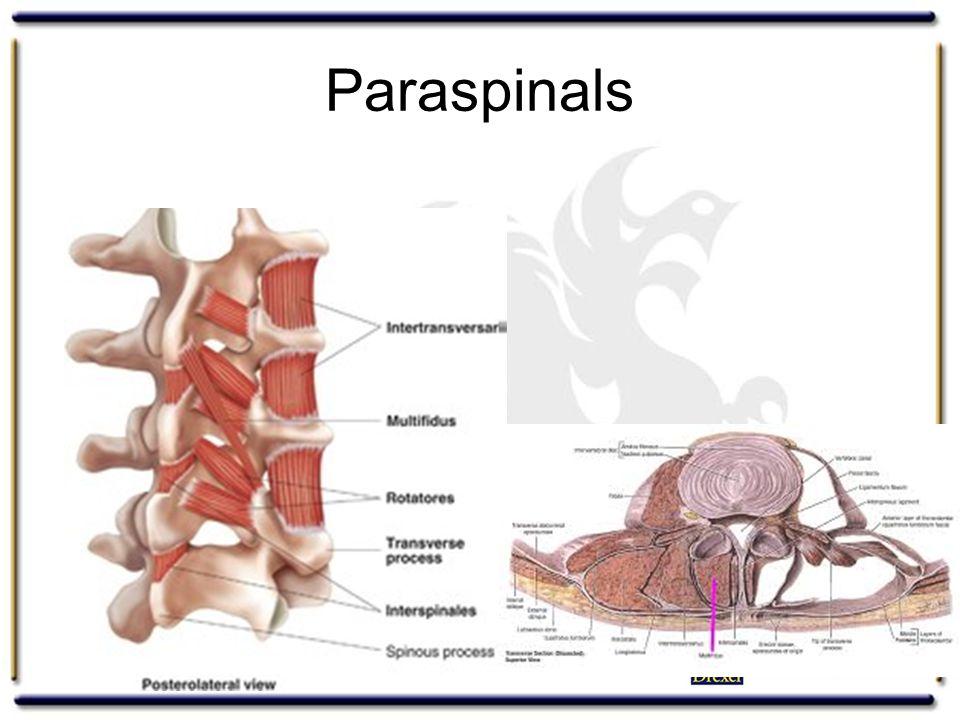 Paraspinals