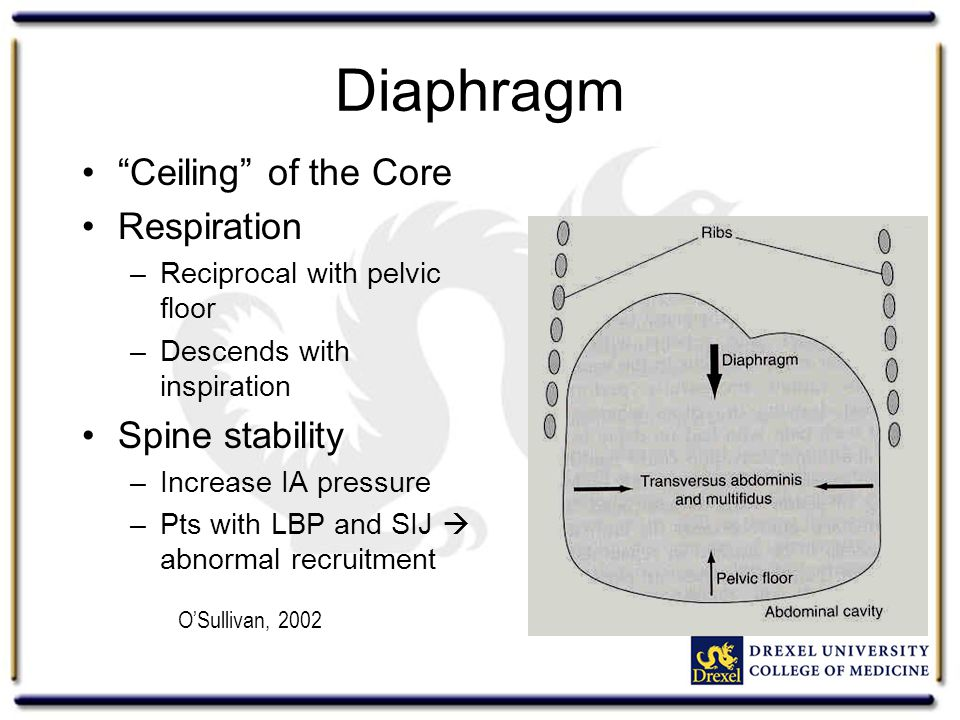 "Diaphragm ""Ceiling"" of the Core Respiration –Reciprocal with pelvic floor –Descends with inspiration Spine stability –Increase IA pressure –Pts with L"