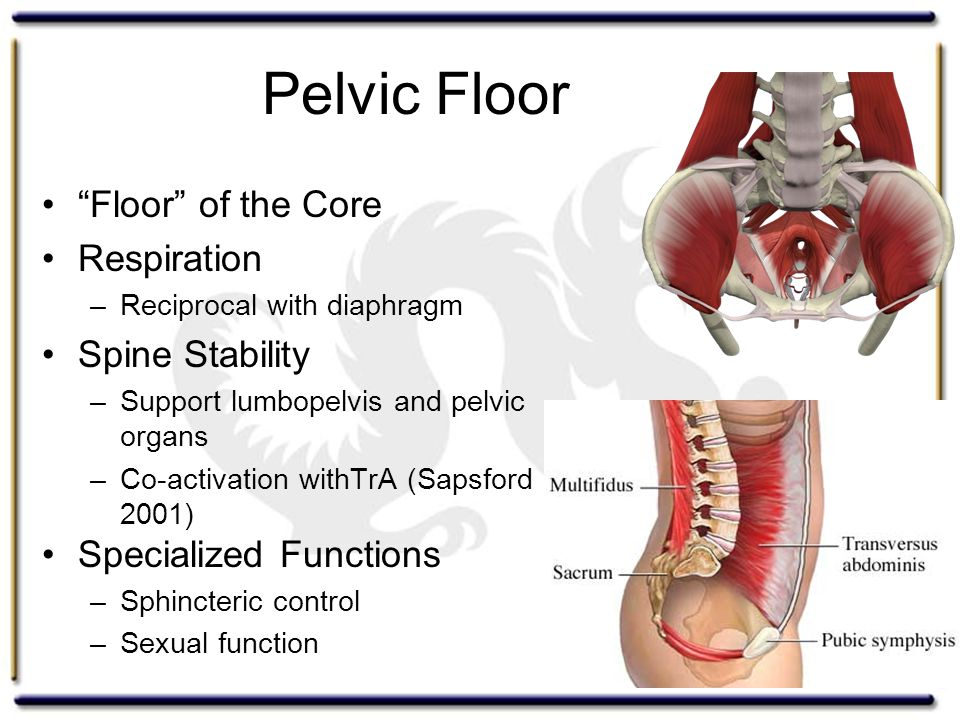 "Pelvic Floor ""Floor"" of the Core Respiration –Reciprocal with diaphragm Spine Stability –Support lumbopelvis and pelvic organs –Co-activation withTrA"