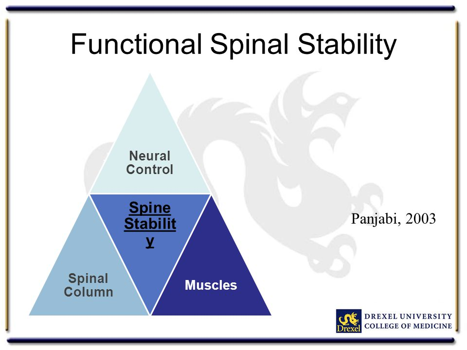 Functional Spinal Stability Neural Control Spinal Column Spine Stabilit y Muscles Panjabi, 2003