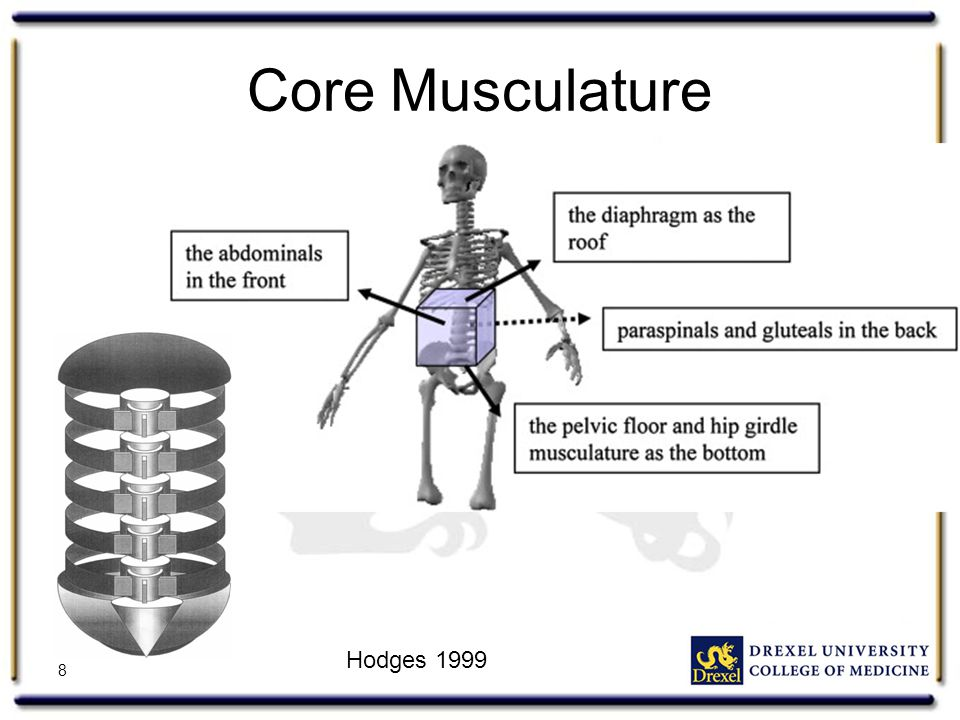Core Musculature 8 Hodges 1999
