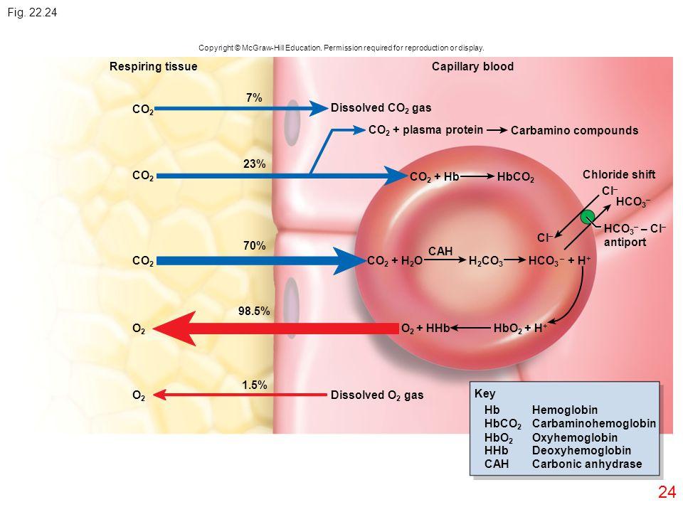24 Respiring tissueCapillary blood CO 2 O2O2 O2O2 7% 23% 70% 98.5% Dissolved CO 2 gas Carbamino compounds CO 2 + plasma protein CO 2 + Hb CO 2 + H 2 O