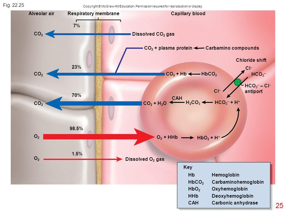 25 CO 2 O2O2 O2O2 7% 23% 70% 98.5% 1.5% Dissolved O 2 gas Alveolar airRespiratory membraneCapillary blood Dissolved CO 2 gas Carbamino compounds Chlor