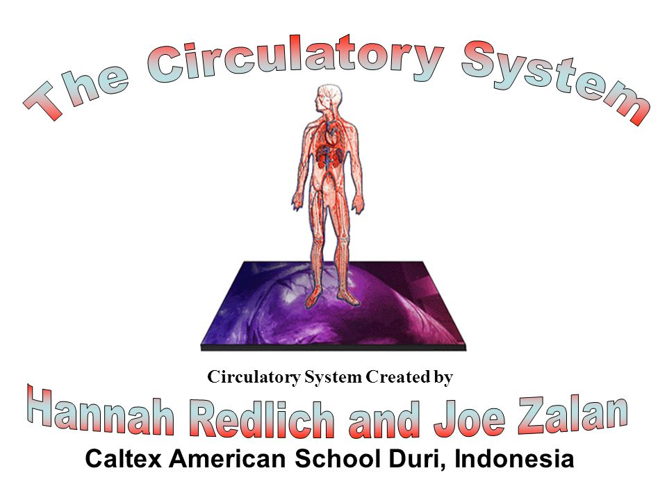 Caltex American School Duri, Indonesia Title Page Circulatory System Created by