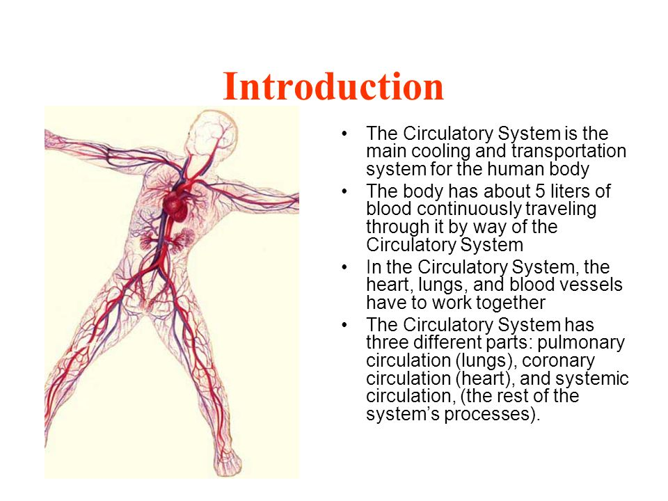 Introduction The Circulatory System is the main cooling and transportation system for the human body The body has about 5 liters of blood continuously