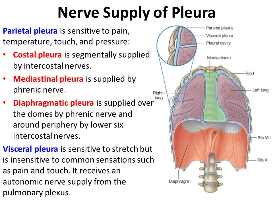 Nerve Supply of Pleura Parietal pleura is sensitive to pain, temperature, touch, and pressure: Costal pleura is segmentally supplied by intercostal ne