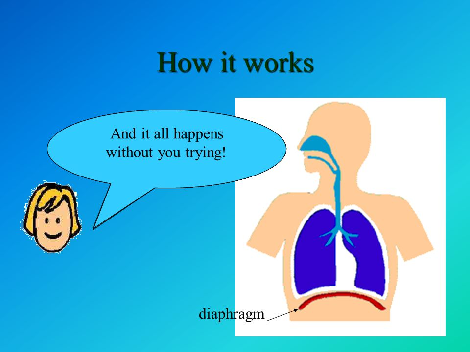 The diaphragm is a very powerful muscle. Watch how it controls breathing When the diaphragm moves down … the lungs expand and air is drawn in. When th