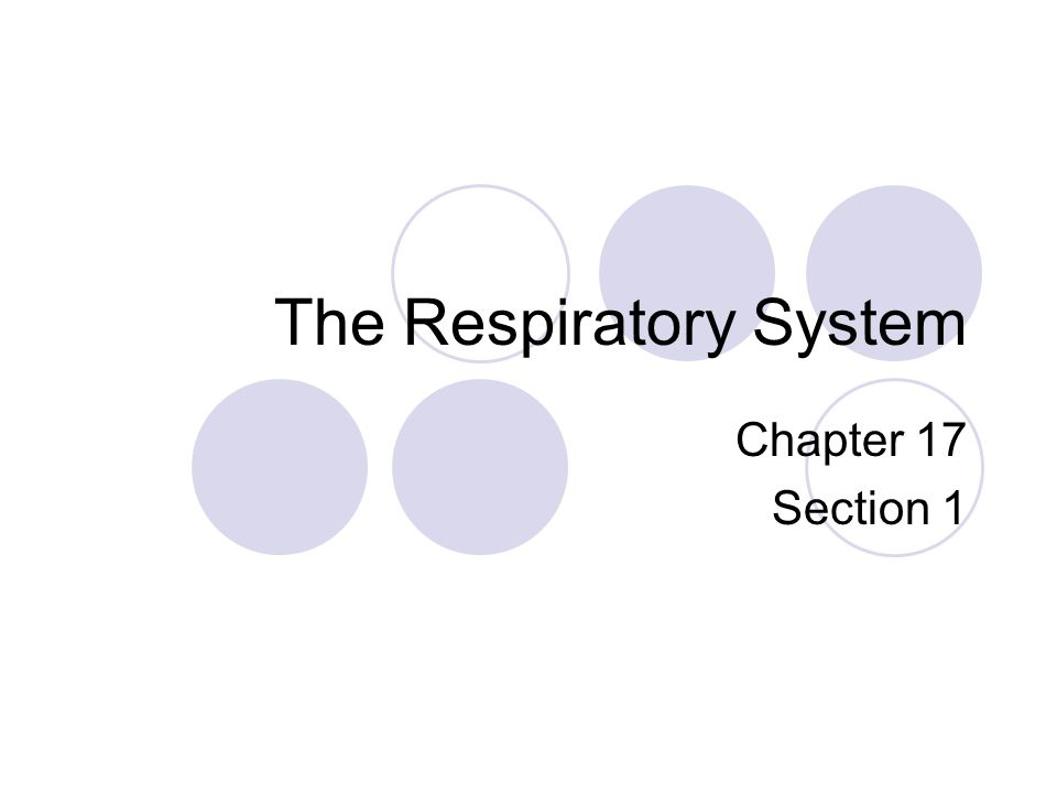 The Respiratory System Chapter 17 Section 1