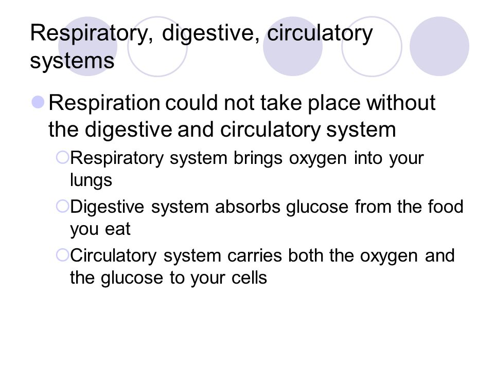 Respiratory, digestive, circulatory systems Respiration could not take place without the digestive and circulatory system  Respiratory system brings