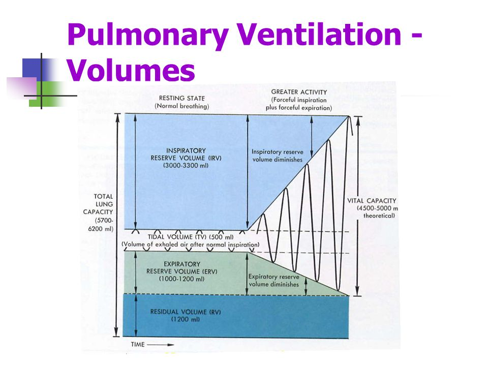 Measures of Pulmonary Ventilation Respiratory volumes – values determined by using a spirometer Tidal Volume (TV) – amount of air inhaled or exhaled with each breath under resting conditions Inspiratory Reserve Volume (IRV) – amount of air that can be inhaled during forced breathing in addition to resting tidal volume Expiratory Reserve Volume (ERV) – amount of air that can be exhaled during forced breathing in addition to tidal volume Residual Volume (RV) – Amount of air remaining in the lungs after a forced exhalation.