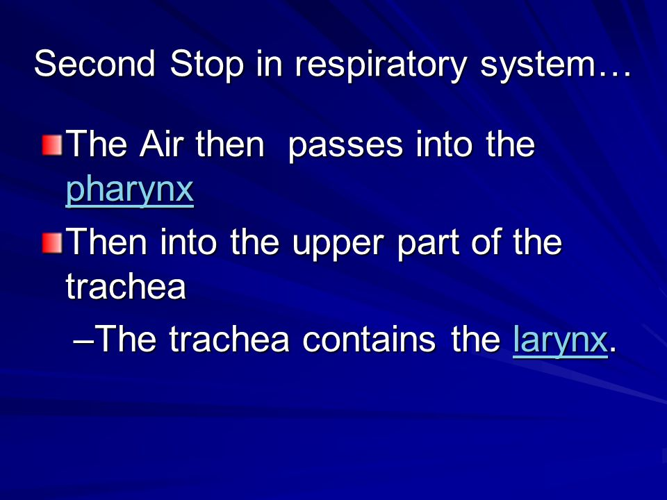 Use this information to fill in your diagram of the respiratory system.