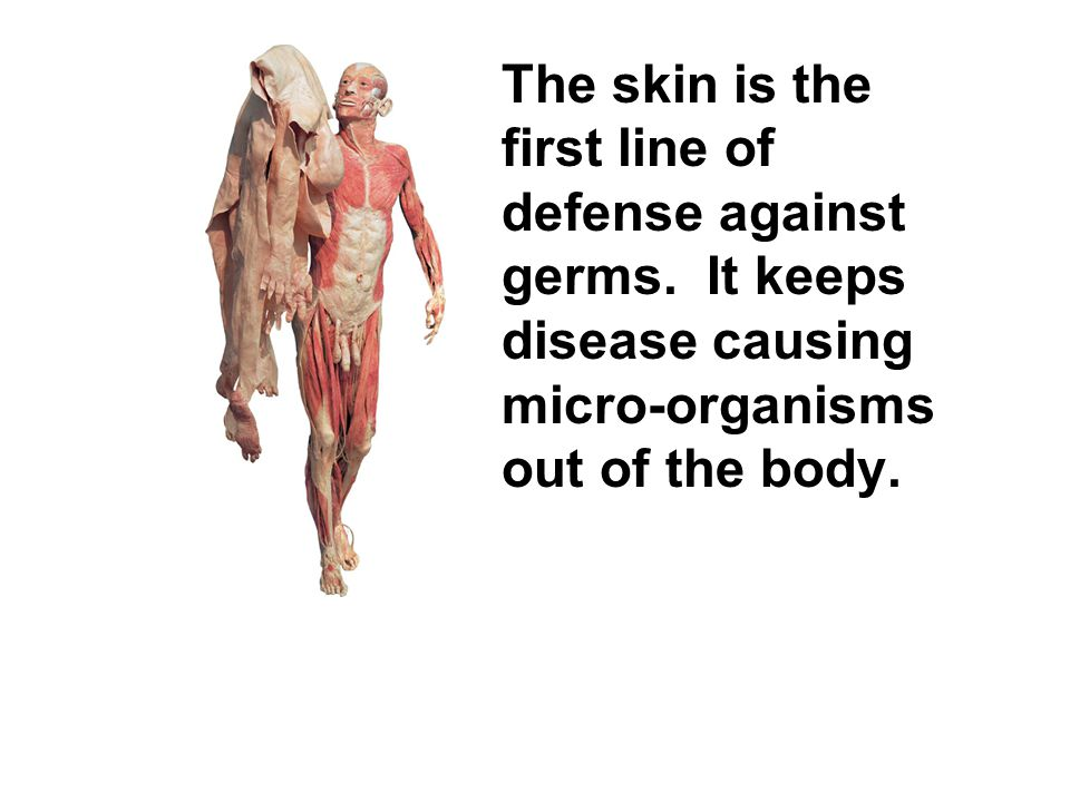 The skin is the first line of defense against germs. It keeps disease causing micro-organisms out of the body.