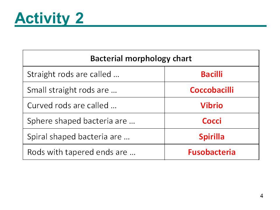 4 Activity 2