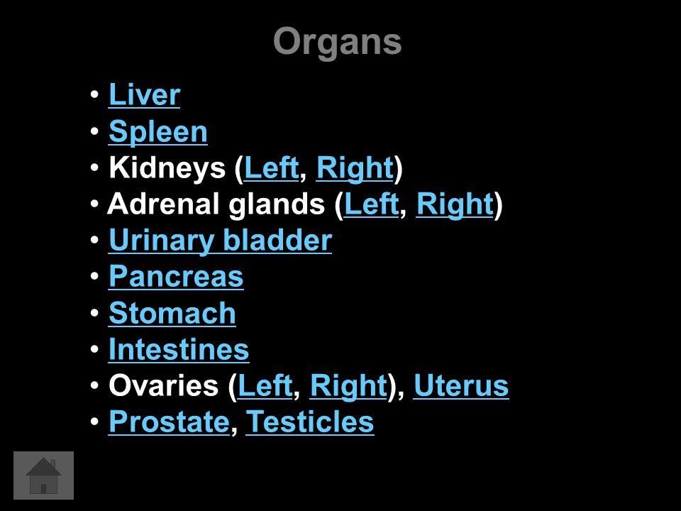 Organs Liver Spleen Kidneys (Left, Right)LeftRight Adrenal glands (Left, Right)LeftRight Urinary bladder Pancreas Stomach Intestines Ovaries (Left, Right), UterusLeftRightUterus Prostate, TesticlesProstateTesticles