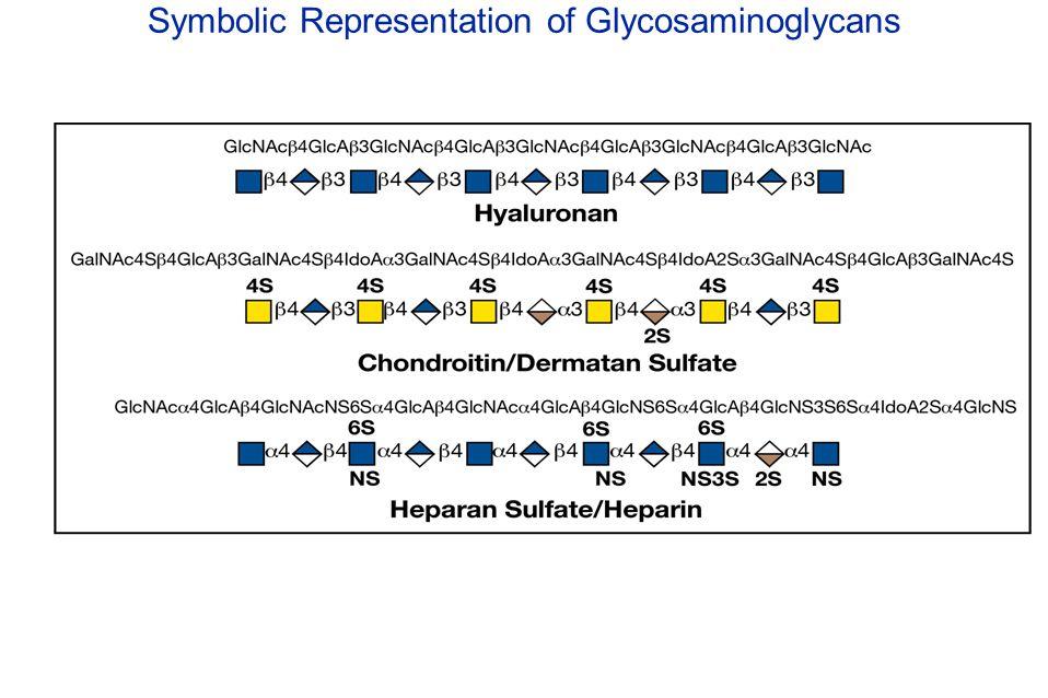 Symbolic Representation of Glycosaminoglycans