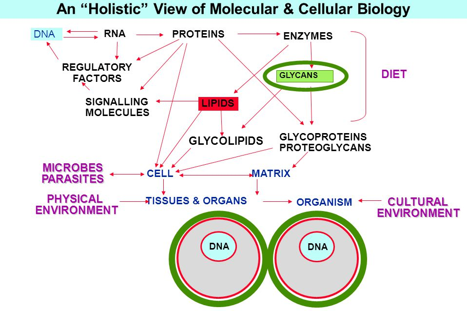 LIPIDS DNA RNA PROTEINS ORGANISM MATRIXCELL TISSUES & ORGANS PHYSICALENVIRONMENT GLYCOPROTEINS PROTEOGLYCANS GLYCOLIPIDS ENZYMES MICROBESPARASITES DNA