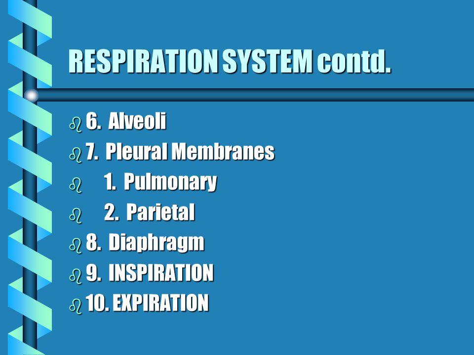 RESPIRATORY SYSTEM contd. b II b II LOWER RESPIRATORY TRACT b 1.