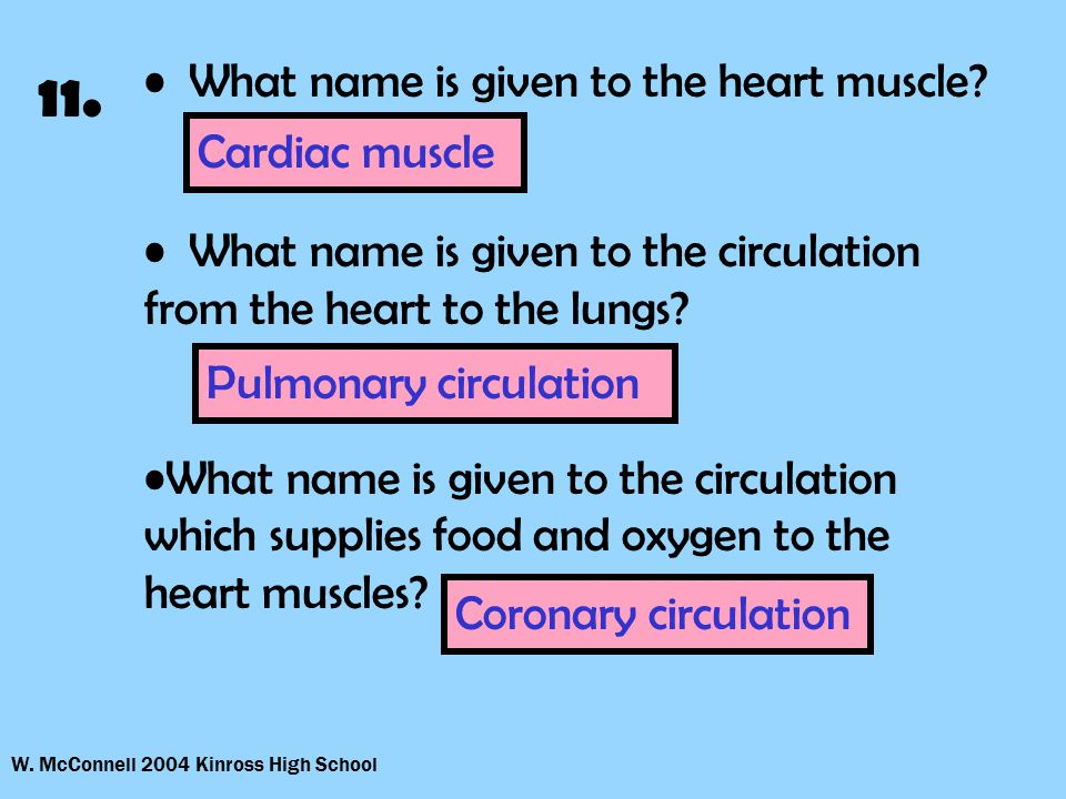 W. McConnell 2004 Kinross High School 11. What name is given to the heart muscle.