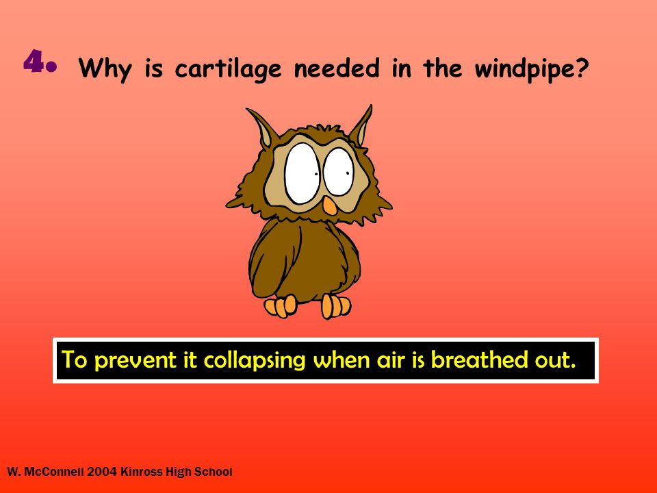 W.McConnell 2004 Kinross High School 4. Why is cartilage needed in the windpipe.