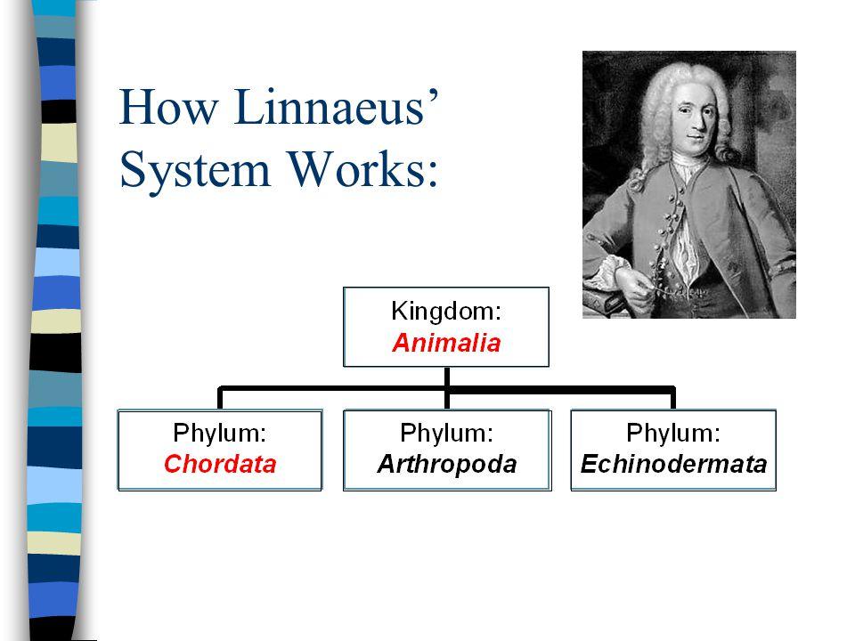 How Linnaeus' System Works: