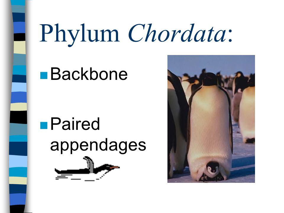 Phylum Chordata: n Backbone n Paired appendages