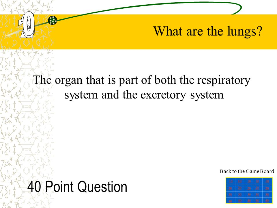 30 Point Question The organ that stores urine What is the bladder? Back to the Game Board
