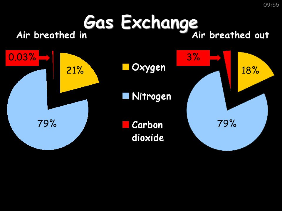 09:55 Gas Exchange Air breathed inAir breathed out 79% 21%18% 0.03%3%