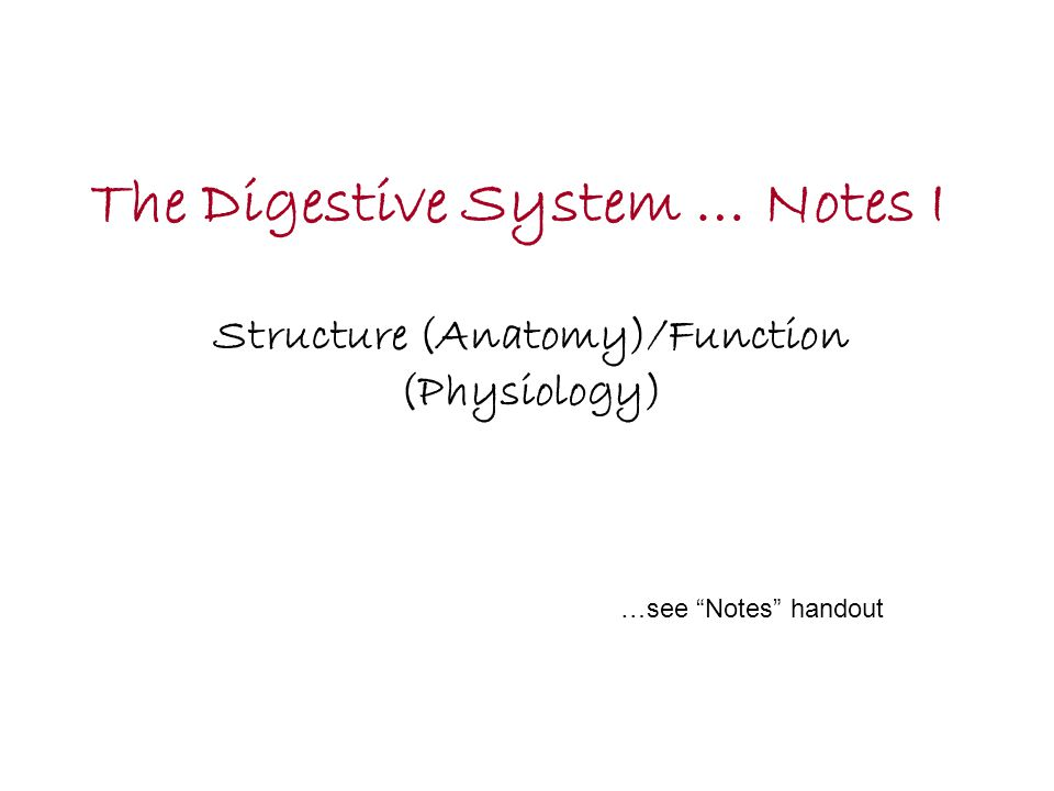 """The Digestive System … Notes I Structure (Anatomy)/Function (Physiology) …see """"Notes"""" handout"""