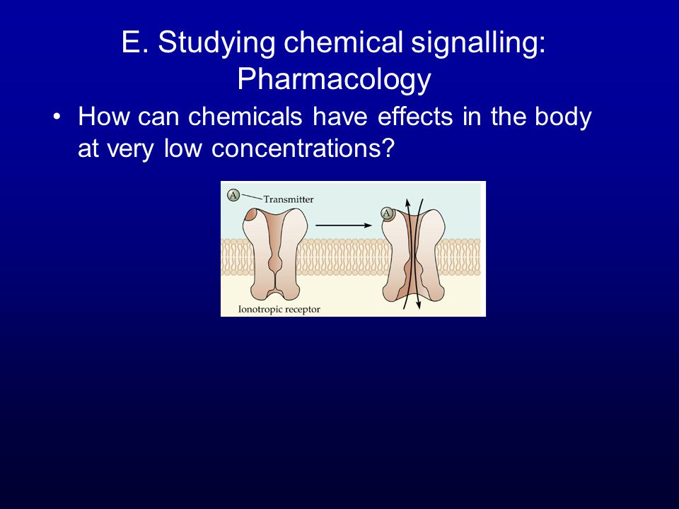 E. Studying chemical signalling: Pharmacology How can chemicals have effects in the body at very low concentrations?