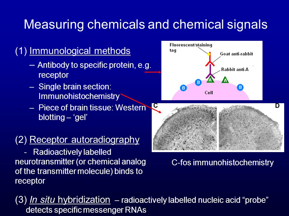 Measuring chemicals and chemical signals (1) Immunological methods – Antibody to specific protein, e.g.