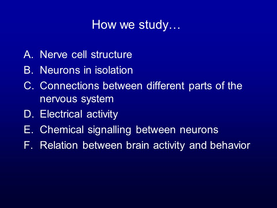How we study… A.Nerve cell structure B.Neurons in isolation C.Connections between different parts of the nervous system D.Electrical activity E.Chemical signalling between neurons F.Relation between brain activity and behavior
