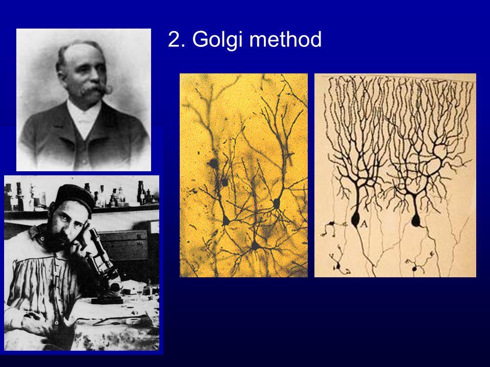 2. Golgi method